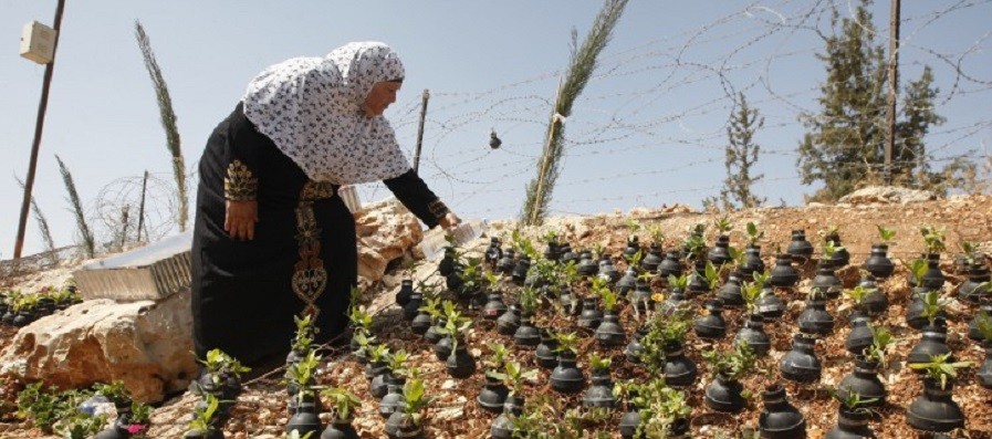 A Palestinian woman waters plants growing in tear gas canisters in   the village of Bilin, near the West Bank city of Ramallah, Wednesday,   Oct. 2, 2013. (AP Photo/Majdi Mohammed)