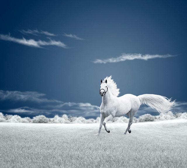 White Horse Running-free